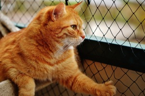 cat-1350463_1280